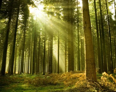 Intranet forest trees consulting